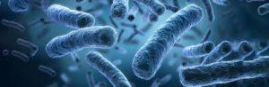 Detoxerum - ontgifting van het lichaam - tablets - nederland - prijs